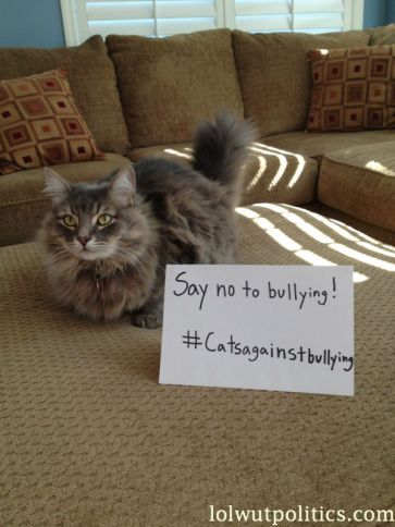 cats-against-bullying-2