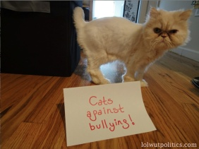 Cats Against Bullying
