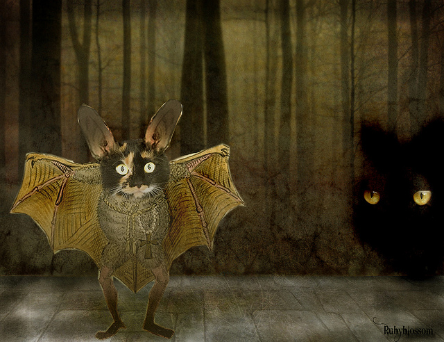 batcat-fantasy-cat