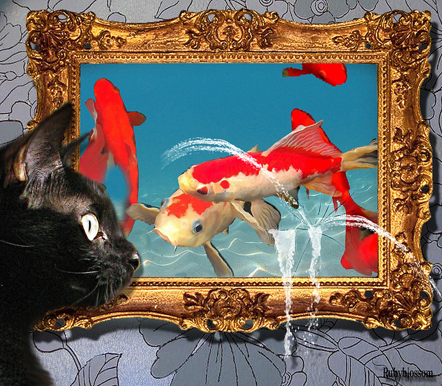 cat-fantasy-photo-with-koi