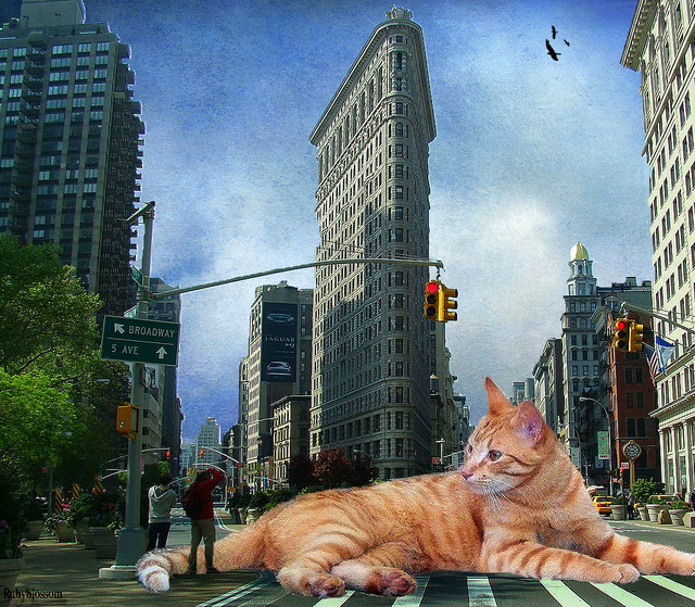 cat-in-NYC-fantasy
