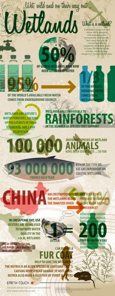 Wetlands infographics