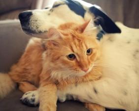 friendship-love-1