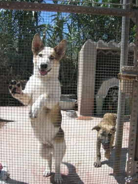 support-an-animal-shelter-wishlist