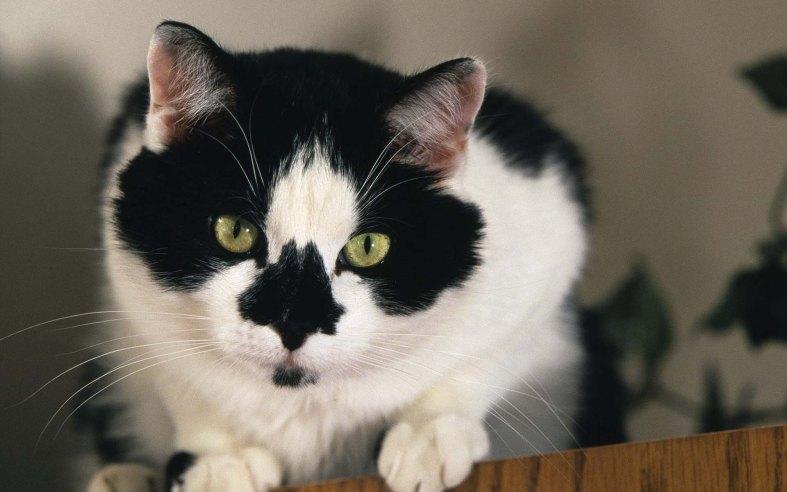 Cats (149)